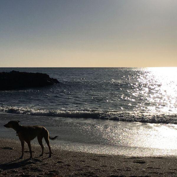Walking best friend on beach