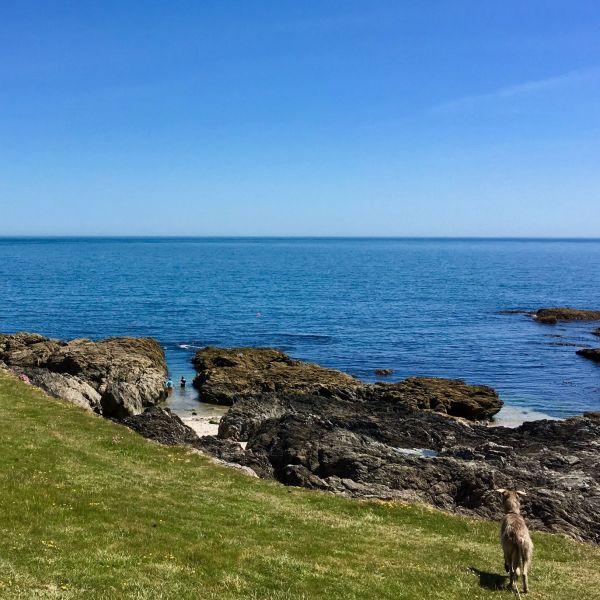 Coast path rock beach